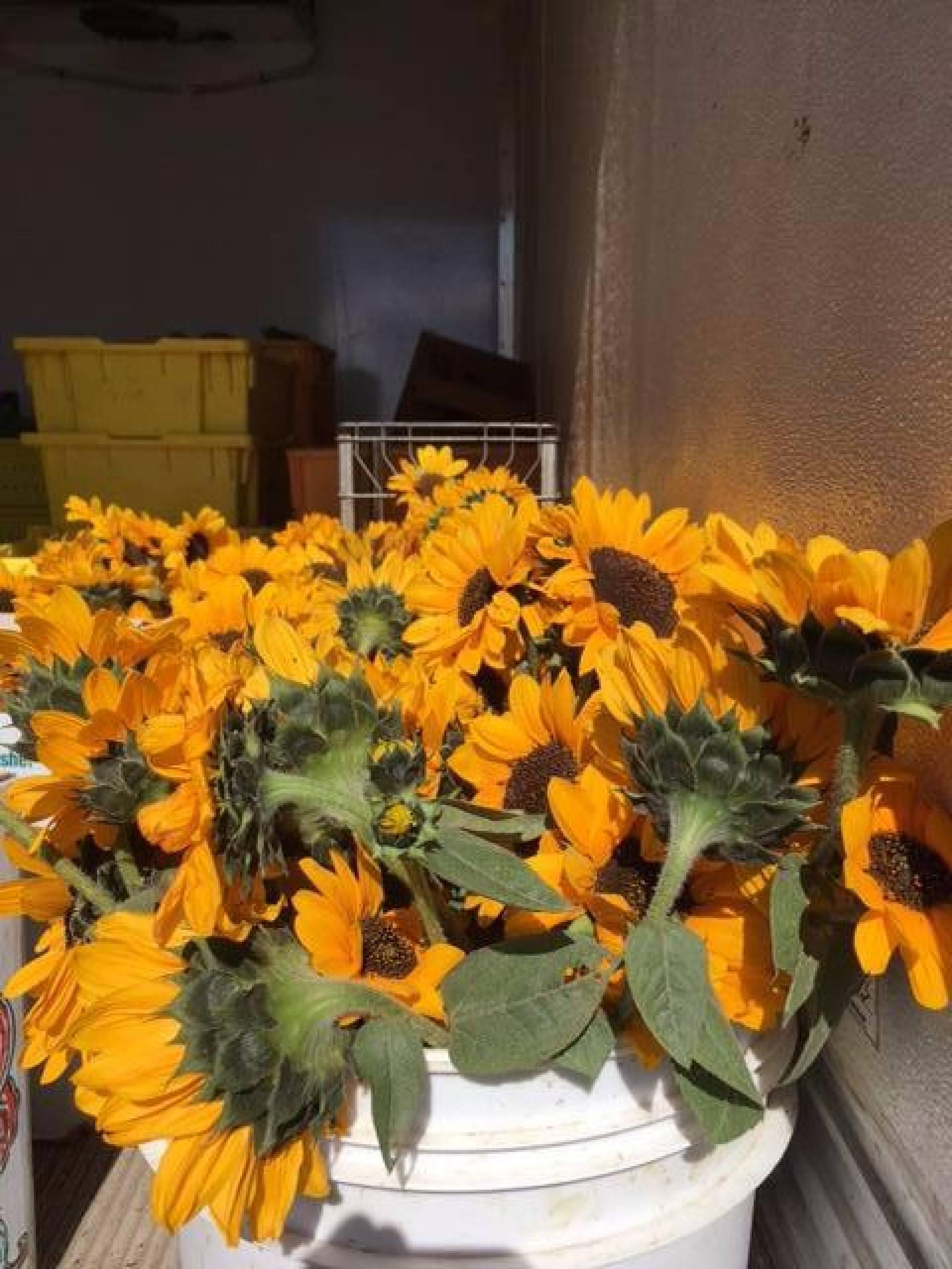Sunflower Blueberry Bar (2 for $8)
